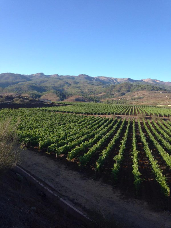 Altos de trevejos foto wijngaard van twitter - wijnhuis oinos